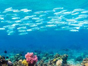 В правила рыболовства для Волжско-Каспийского рыбохозяйственного бассейна внесены изменения