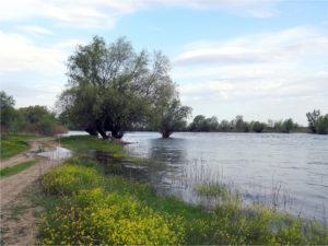 В Астраханской области началось половодье.