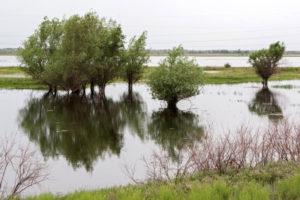 Руководитель Федерального агентства водных ресурсов Дмитрий Кириллов о состоянии ресурсов Волжского бассейна
