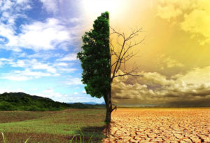 Онлайн-конференция о проблеме изменения климата